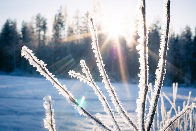 Pakkaslumen hehku auringonpaisteessa.