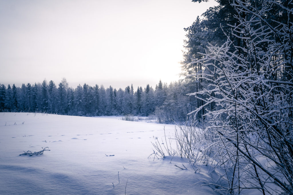 Harmaa talvinen maisema.