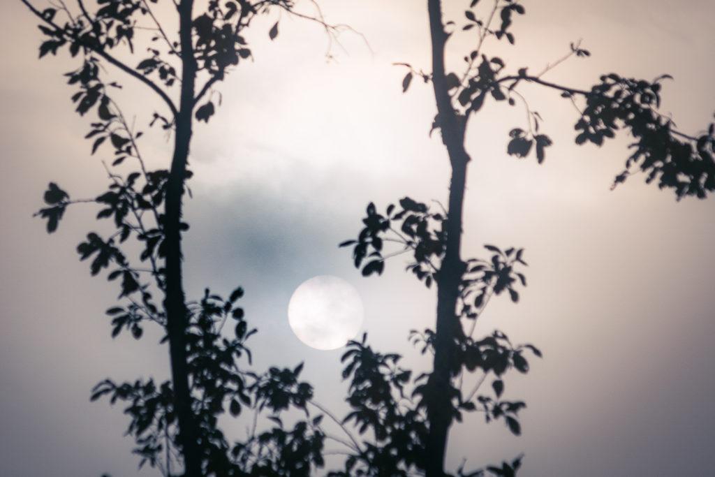 Aurinko pilkistelee usvaverhon takaa.