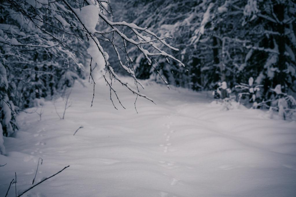 Jäniksen jäljet lumella.