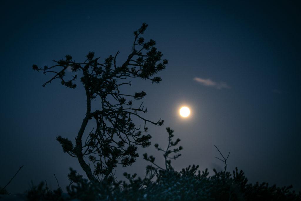 Käkkärä puu ja kuu suolla.