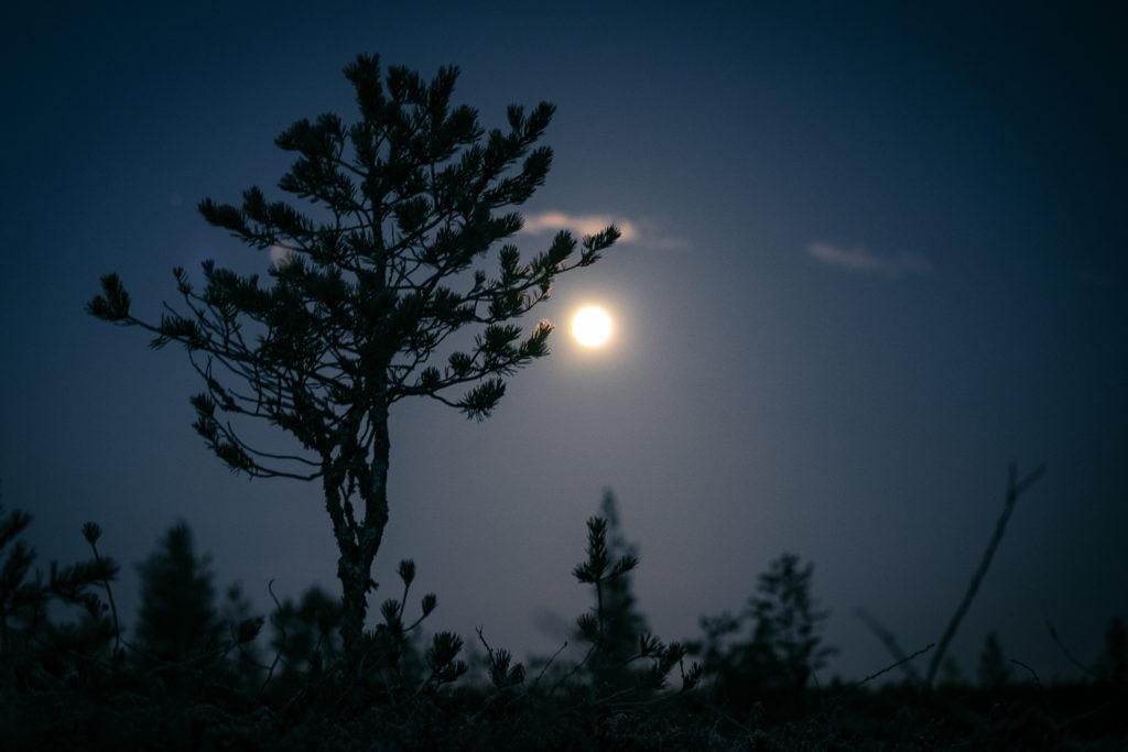 Puun käkkärä ja kuun loiste suolla.