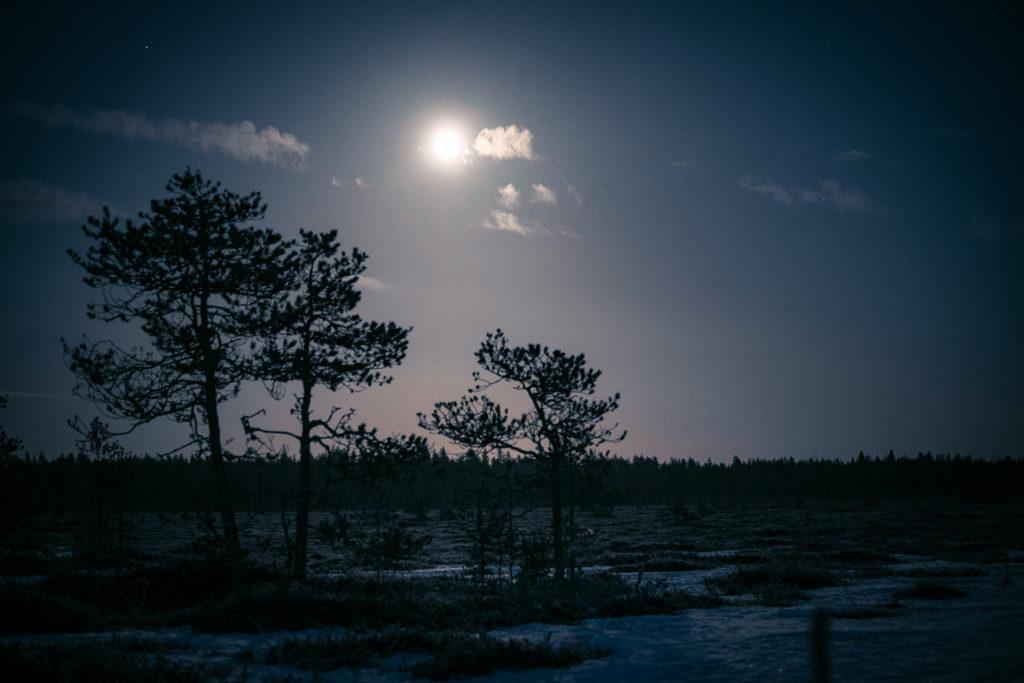 Kuun loiste osuu suolla kasvaviin puihin.