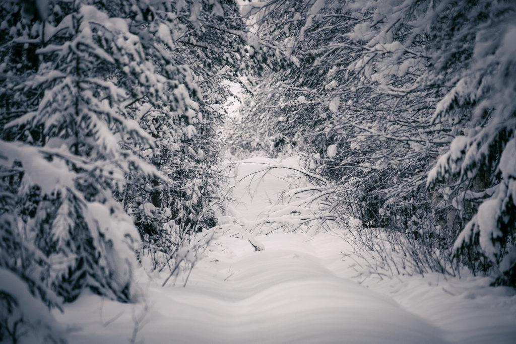 Luminen tie ja riippuvat oksat.