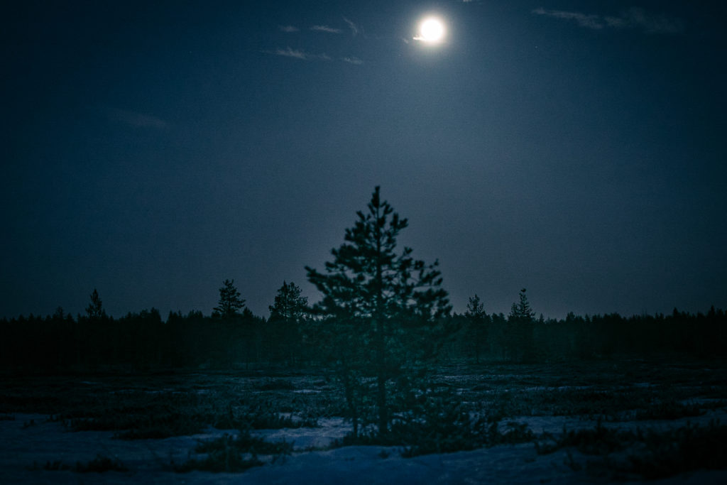 Täysikuu valaisee suolla.