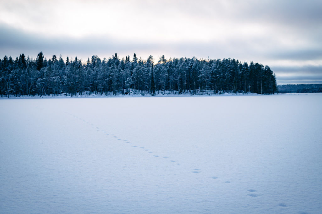 Talvinen järvimaisema.