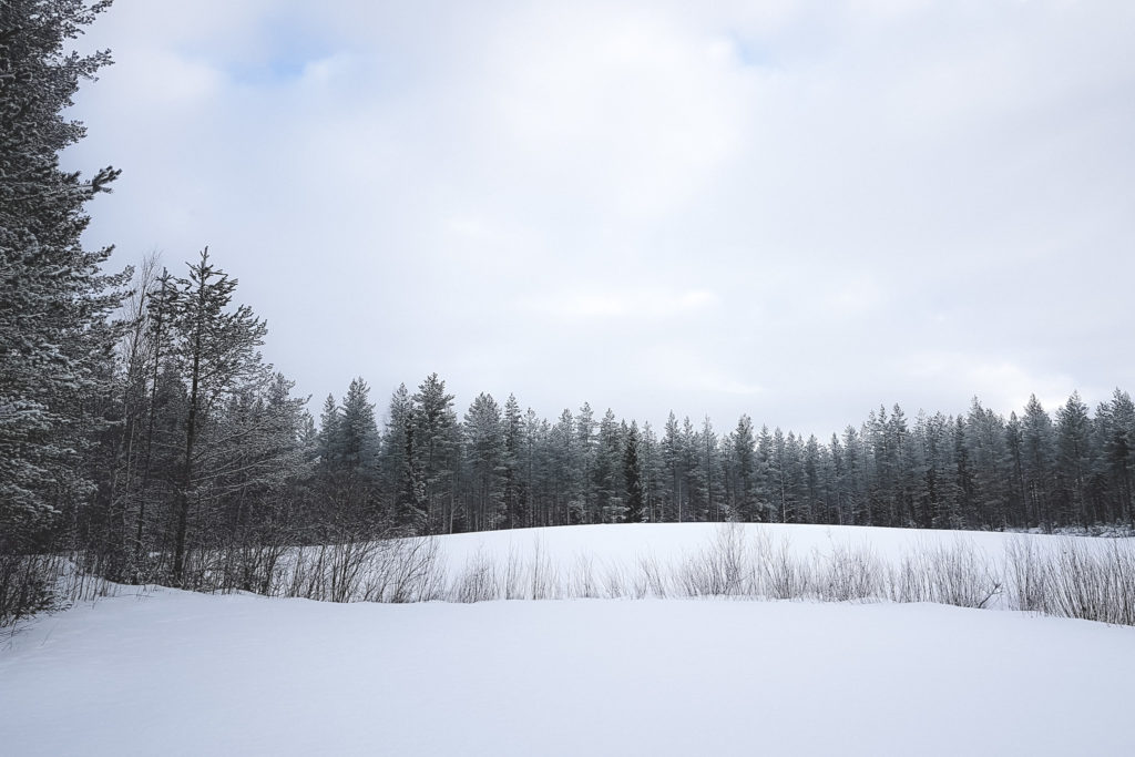 Luminen peltomaisema.