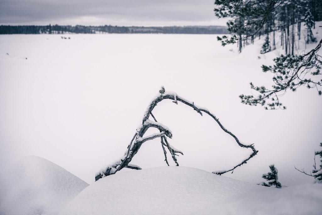 Käkkäräinen oksa ja järvimaisema.