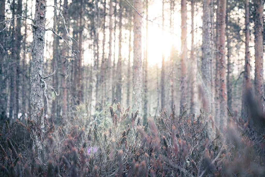 Auringonpaiste metsikössä.