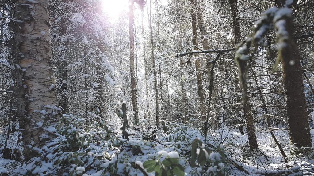 Huhtikuun luminen metsä.