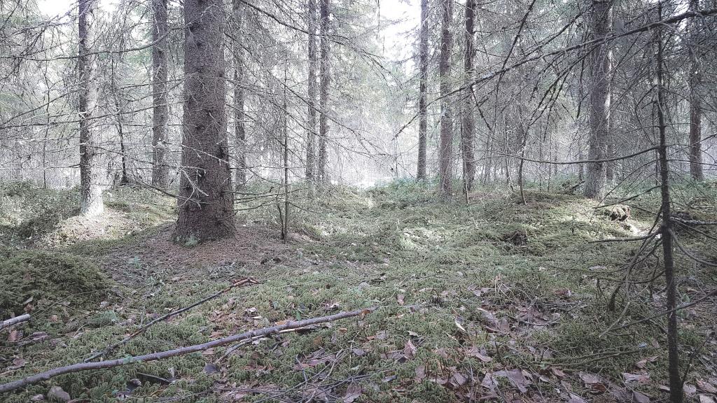 Keväinen metsämaisema.