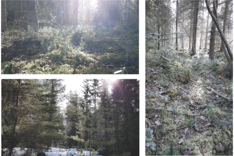 Ulkoilua metsässä keväällä.