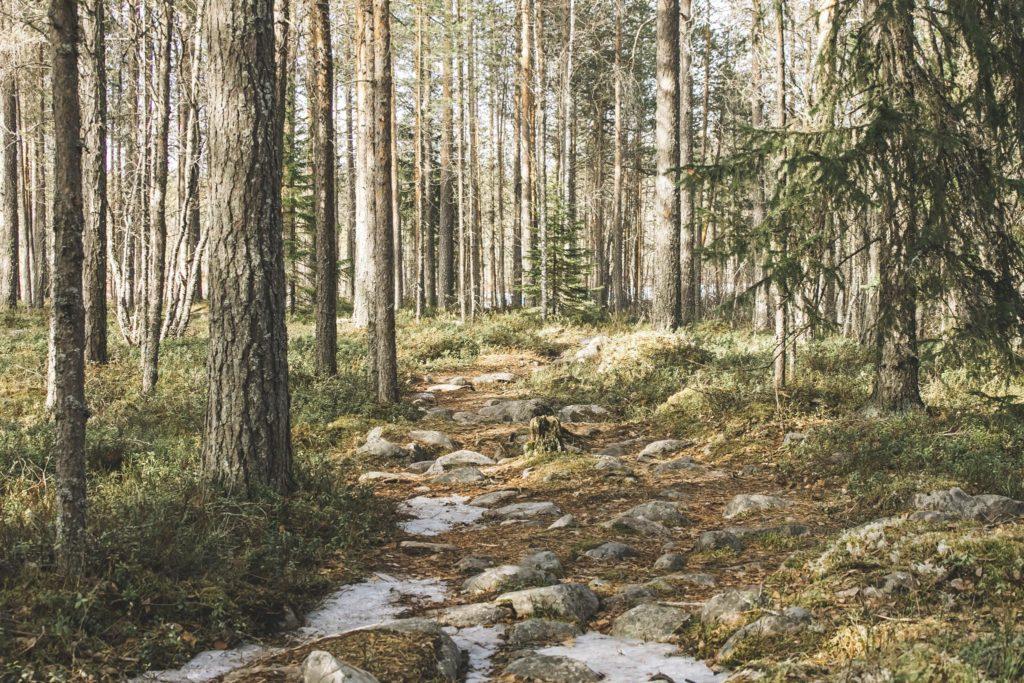 Kivikkoinen polku metsässä.