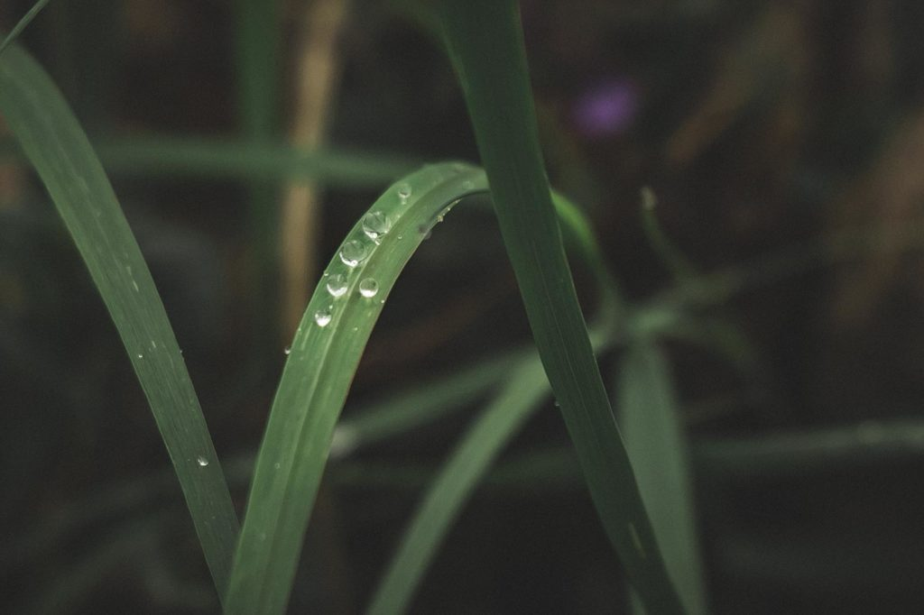 Sadepisarat lehdellä.