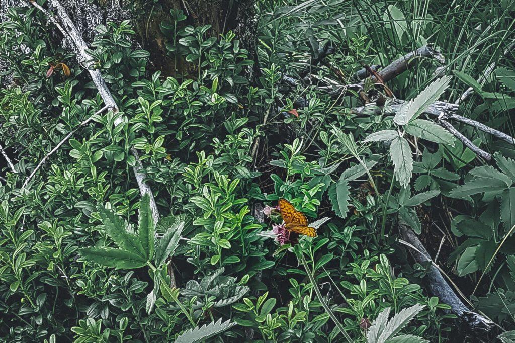 Kaunis perhonen.