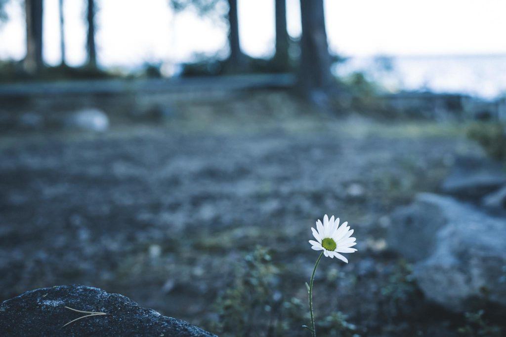 Kukka rannassa.