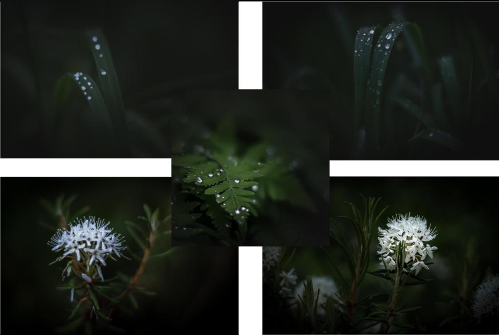 Sisustustaulusuunnitelmia kukkakuvilla.