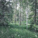 Metsätuhoja tarkastamassa.