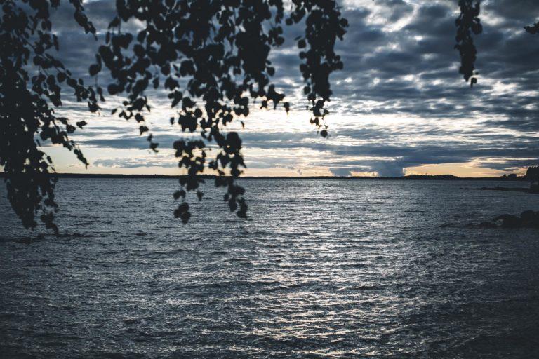 Rantakoivu ja järvimaisemaa Oulujärvellä.