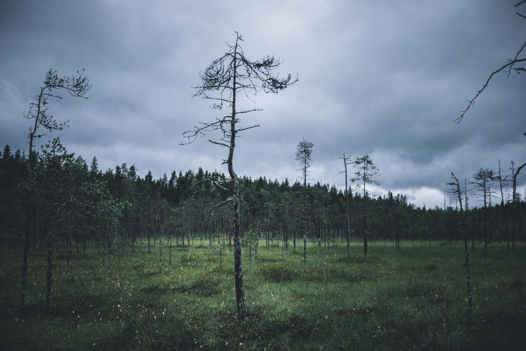Kainuulaista suomaisemaa.