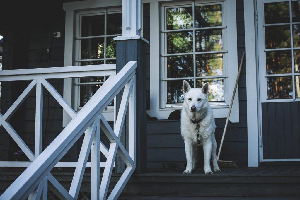 Valkoinen koira kuistilla.
