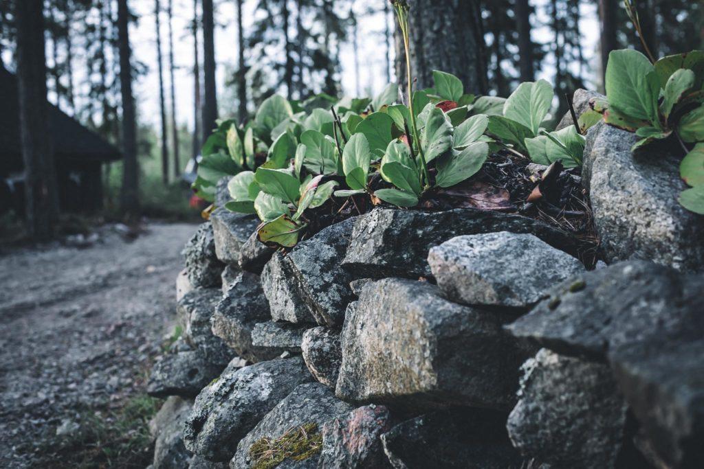 Vuorenkilpi ja kivimuuri.