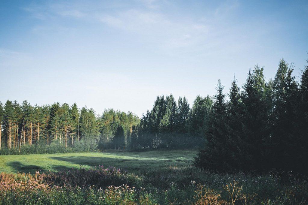 Hentoa usvaa pellolla aamulla.