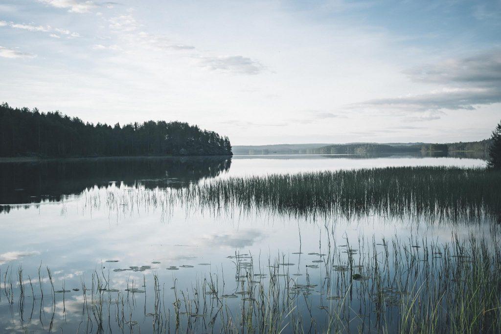 Tyyni järvenselkä aamulla.