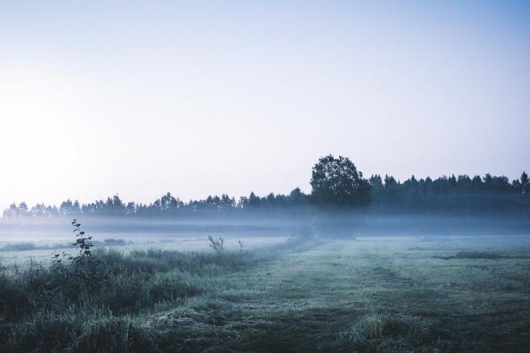 Aamu-usvaa pellolla.