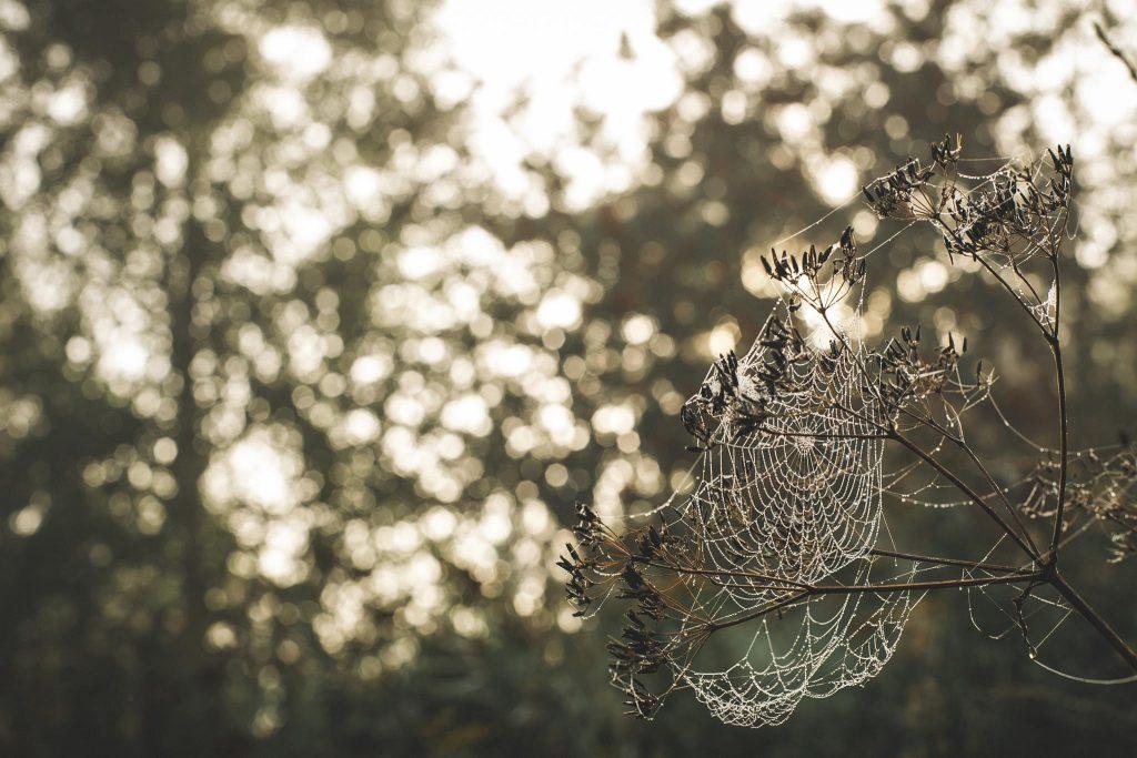 Yökasteen koristama hämähäkinseitti.