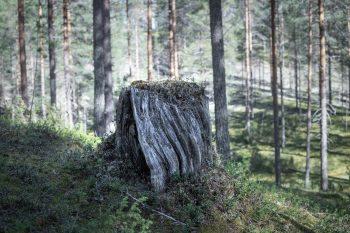 VAUVAN KANSSA PIKNIKILLÄ