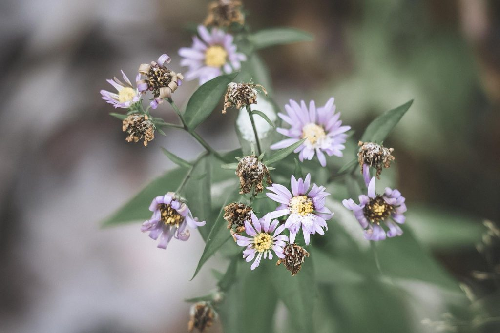 Kukkapenkissä voi olla vielä elämää lokakuussa.