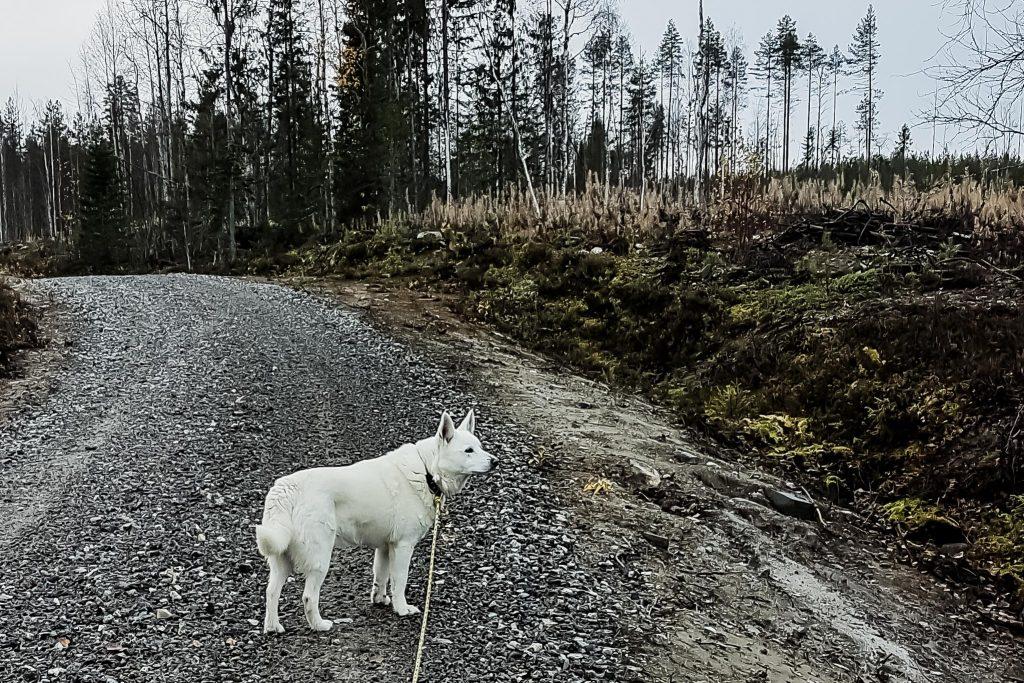 Mökillä lenkkeilemässä koiran kanssa.