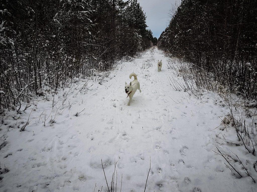 Koirien kanssa ulkoilemassa.