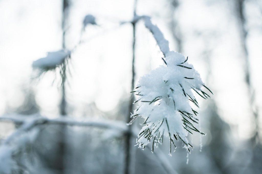 Bokeh-tausta talvikuvassa.