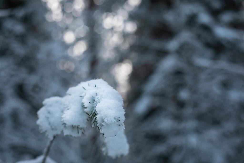 Bokeh tausta metsässä luminen oksa.