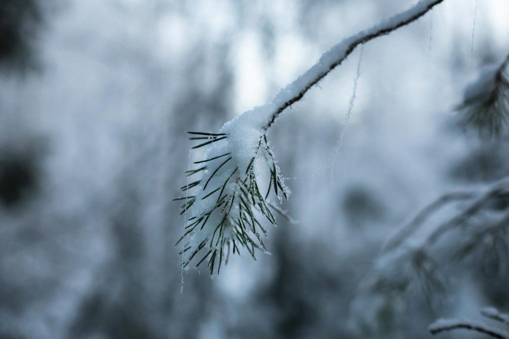 Luminen oksa ja bokeh tausta.