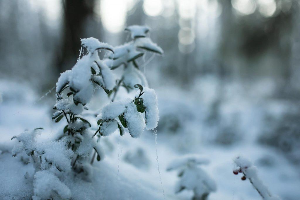 Luminen varpu ja bokeh tausta.