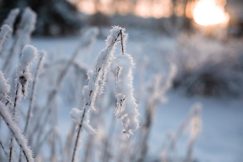 Talven törröttäjä auringonpaisteessa.