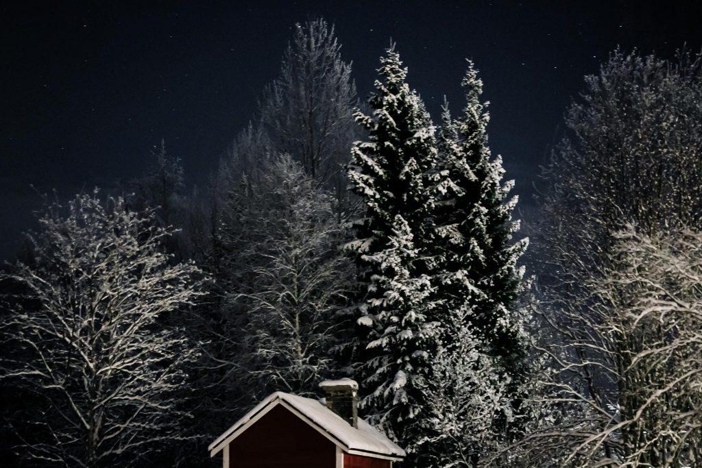 Pakkanen, huurteiset puut ja tähtitaivas.