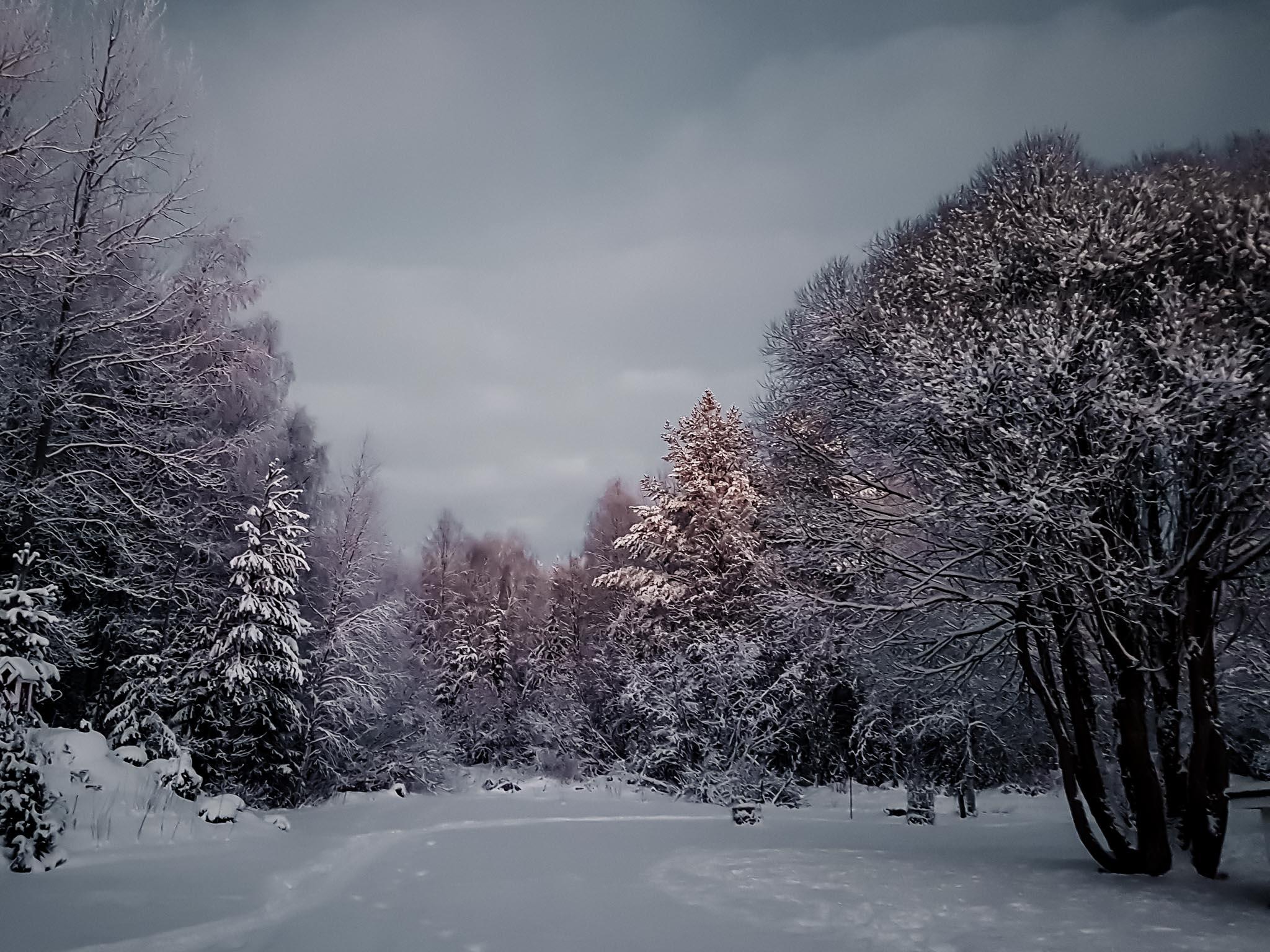 Talvinen pihapiiri.