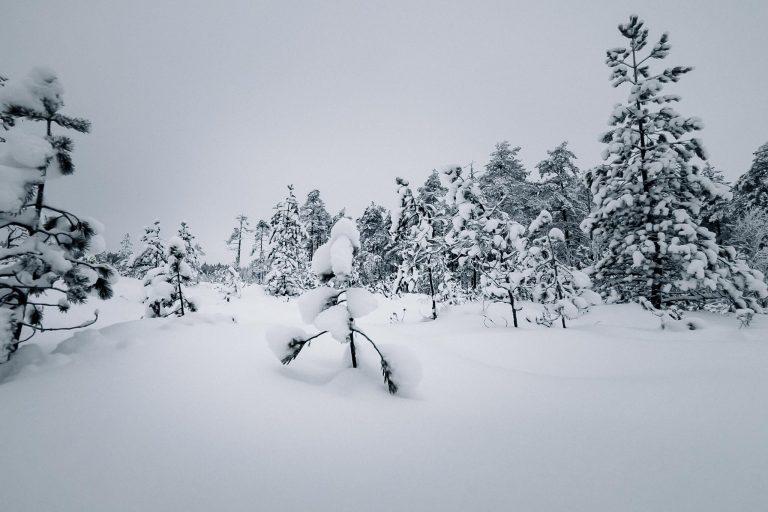 Ulkoilemassa lumisessa metsässä.