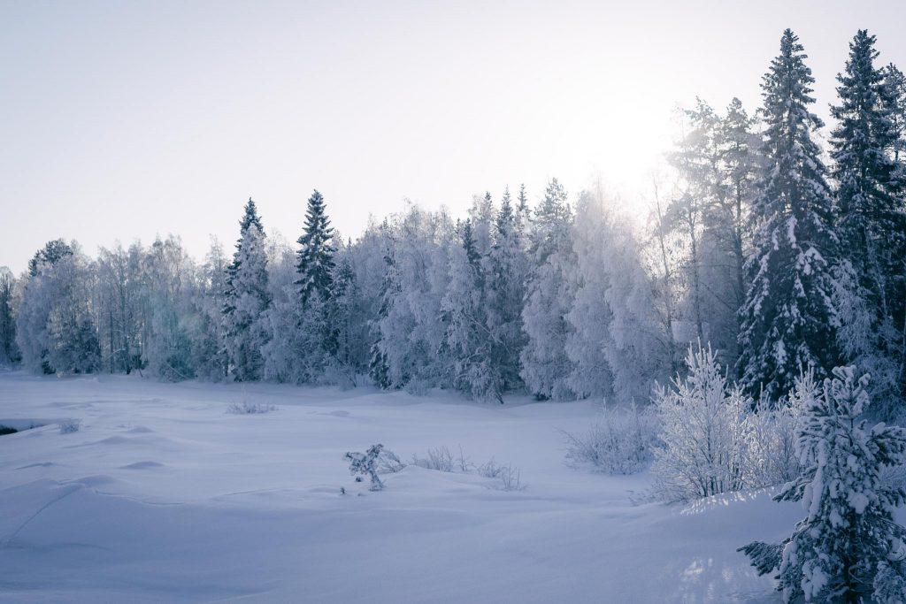 Huurteinen talvimaisema Koitelinkoskilla.