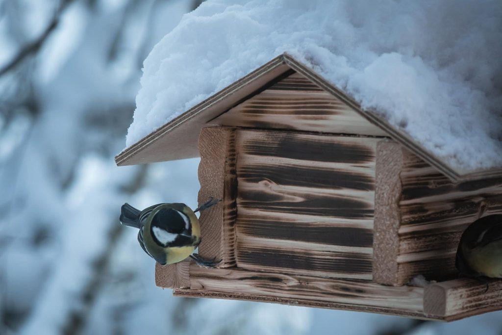 Talitintti ruokailemassa lintulaudalla.