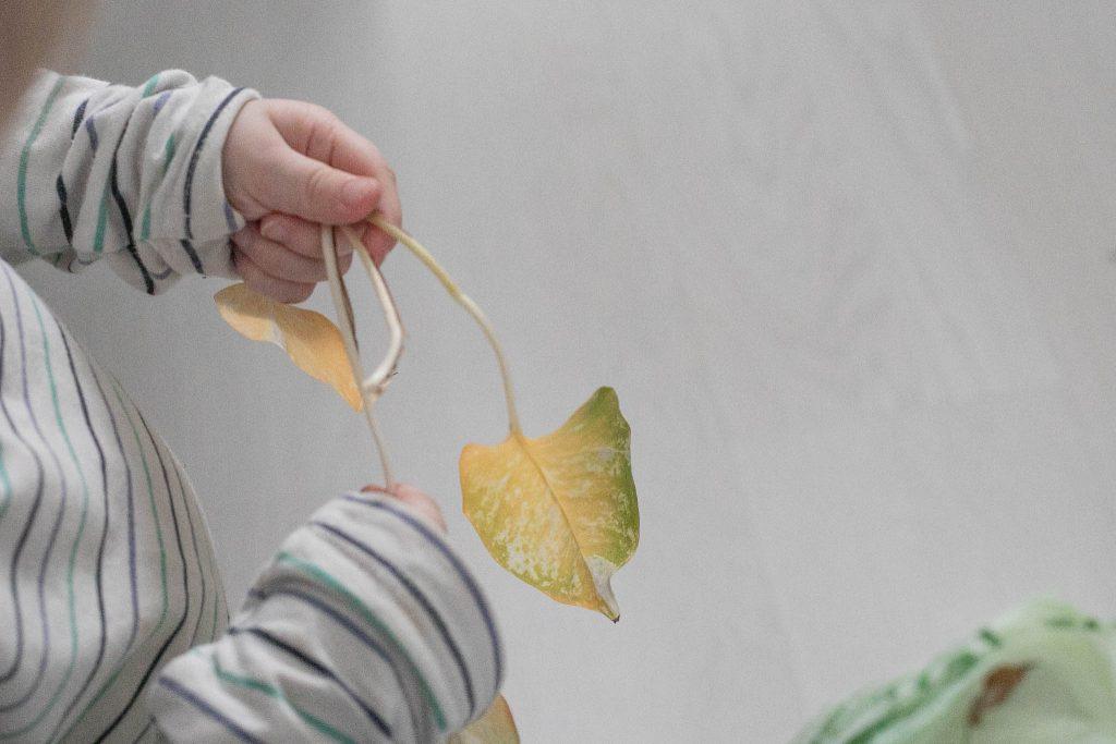 Pikkuapulainen apuna viherkasvien mullanvaihdossa.