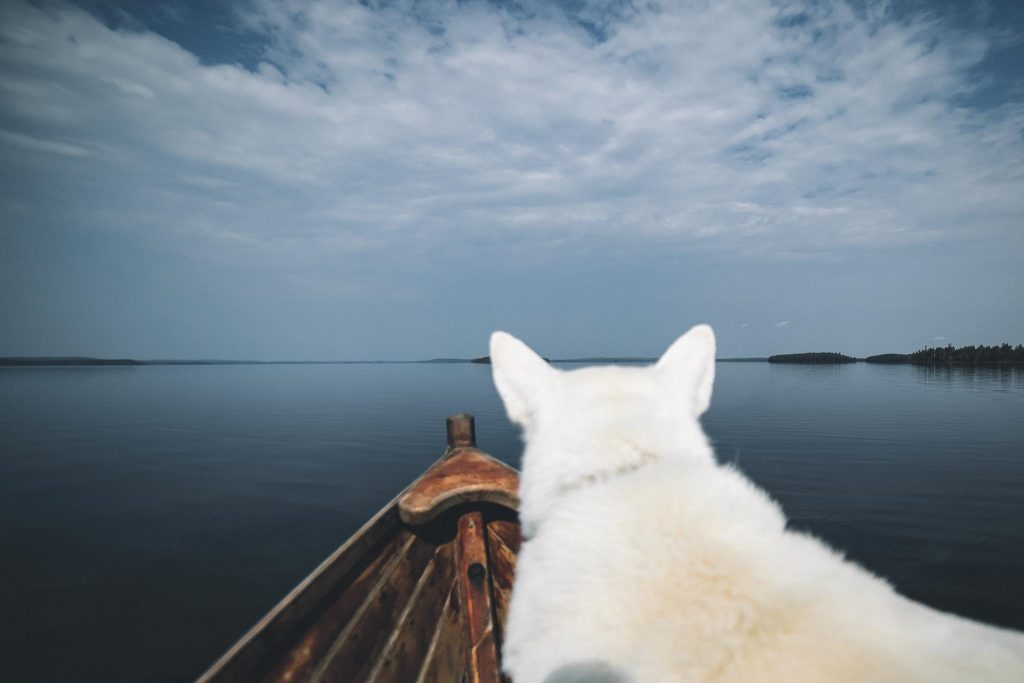 Valkoinen koira ja järven selkä.
