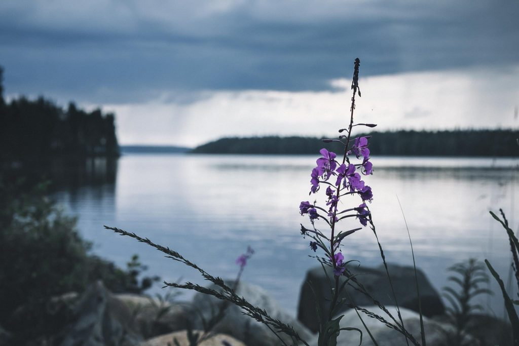 Horsma järvimaisemassa.