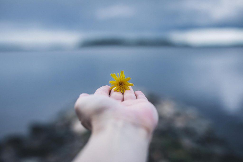 Keltainen kukka kämmenellä.
