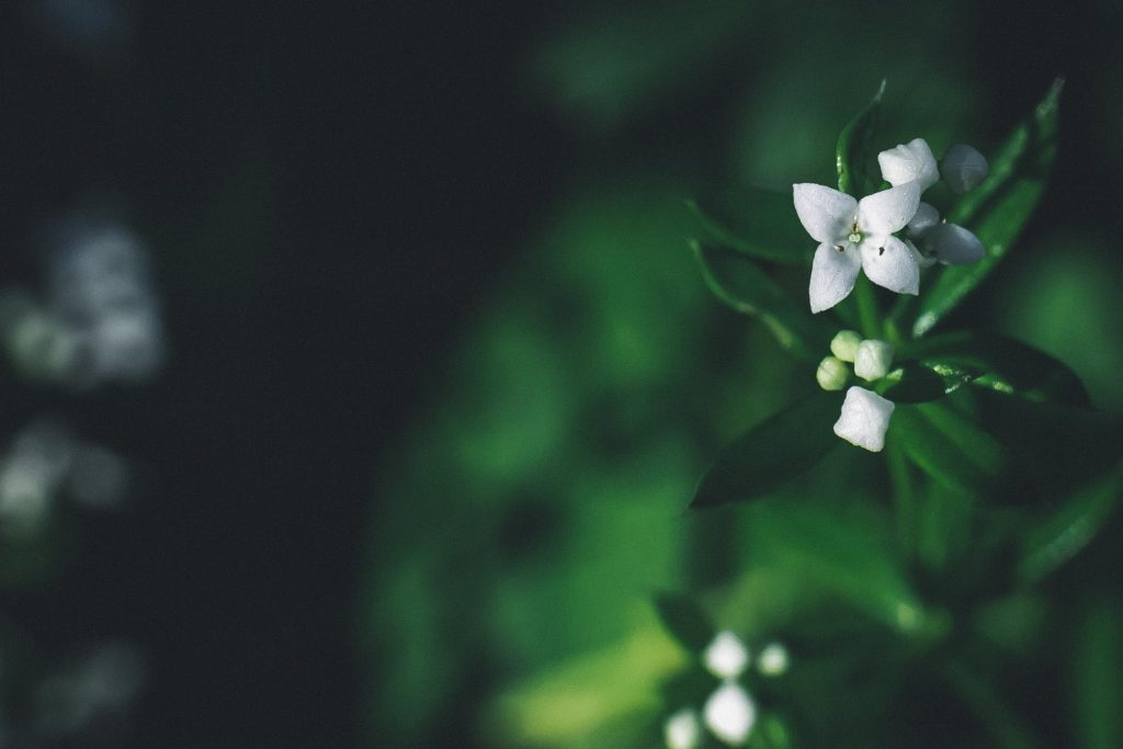 Markolinssillä kukkakuva.